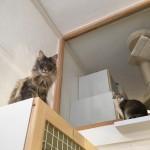 pension pour chats lyon 6 - chatperlipopet